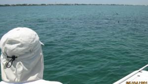 Captiva Islands For Tarpon, Snook, & Redfish Heating Up